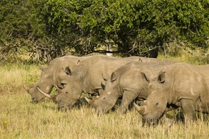 Rhino Ridge Safari Lodge 5