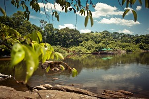 Submerge yourself in the nature of the Amazon