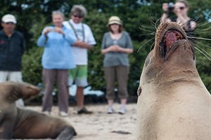 Galapagos, up close with the wildlife