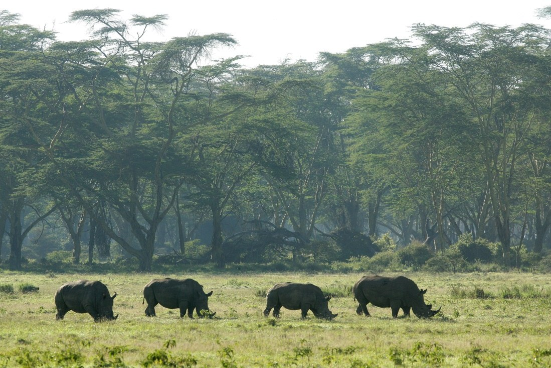 Birdwatching And Wildlife Safari In Kenya S Great Rift