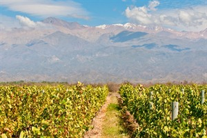 Wineyards of Mendoza