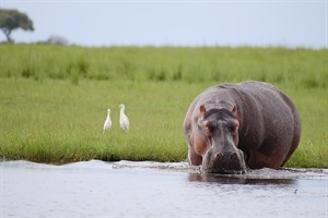 Botswana By Sanctuary Retreats 1