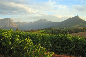 Scenic image of the Cape Winelands, South Africa
