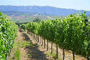 Wineries of the Central Valley