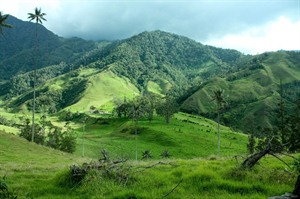 Lush green hills of the Coffee Region