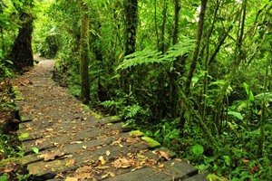 Monteverde Cloud Forest trail