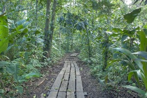 Trail in Tortuguero