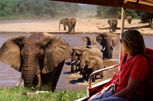 Elephnat Watch Camp elephant river crossing