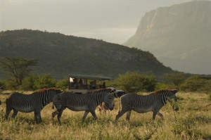 Game drives across the Samburu National Park