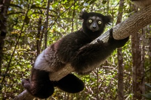 Seeing and hearing Indri makes for a wonderful ending to this tour!