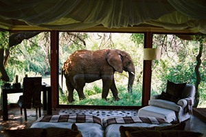 Elephant Outside A Suite At Makayane