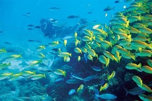 Marine life is at its most vibrant around the Nosy Be archipelago