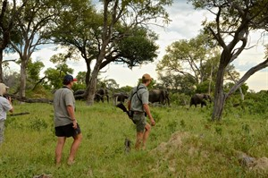 Magical Zimbabwe Safari in 12 Days 2