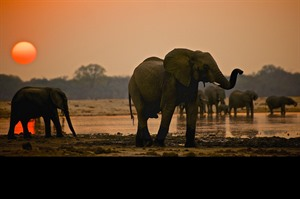 Magical Zimbabwe Safari in 12 Days 3