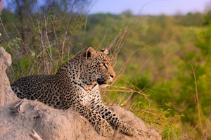 Sabi Sands Private Game Reserve