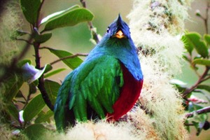 Natural Wonders of Costa Rica Small Group Tour 2020 1