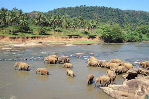 Off the Beaten Track Sri Lanka: Wildlife and Beach Tour 1