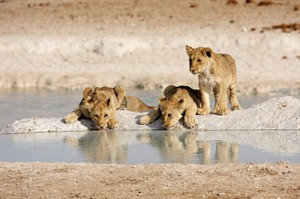 Etosha National Park -  water hole