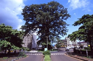 The famed Cotton tree in Freetown