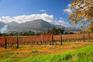 Winelands Region