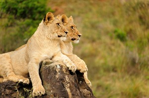 Spotting the Big Five in the Kariega Reserve