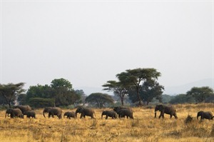 Southern Tanzania Safari and Mozambique Beach 1