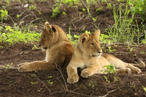 Southern Tanzania Safari and Mozambique Beach 2