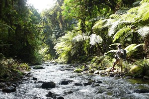 Guided hike in Bwindi Impenetrable National Park