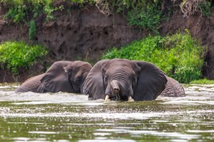 Elephants in Kazinga Channel