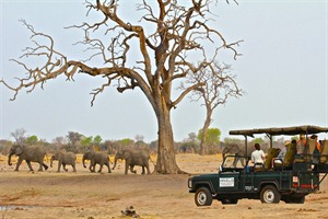 Morning game drive in Hwanage National Park