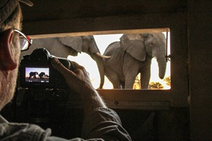 Close encounters with elephant in the underground blind