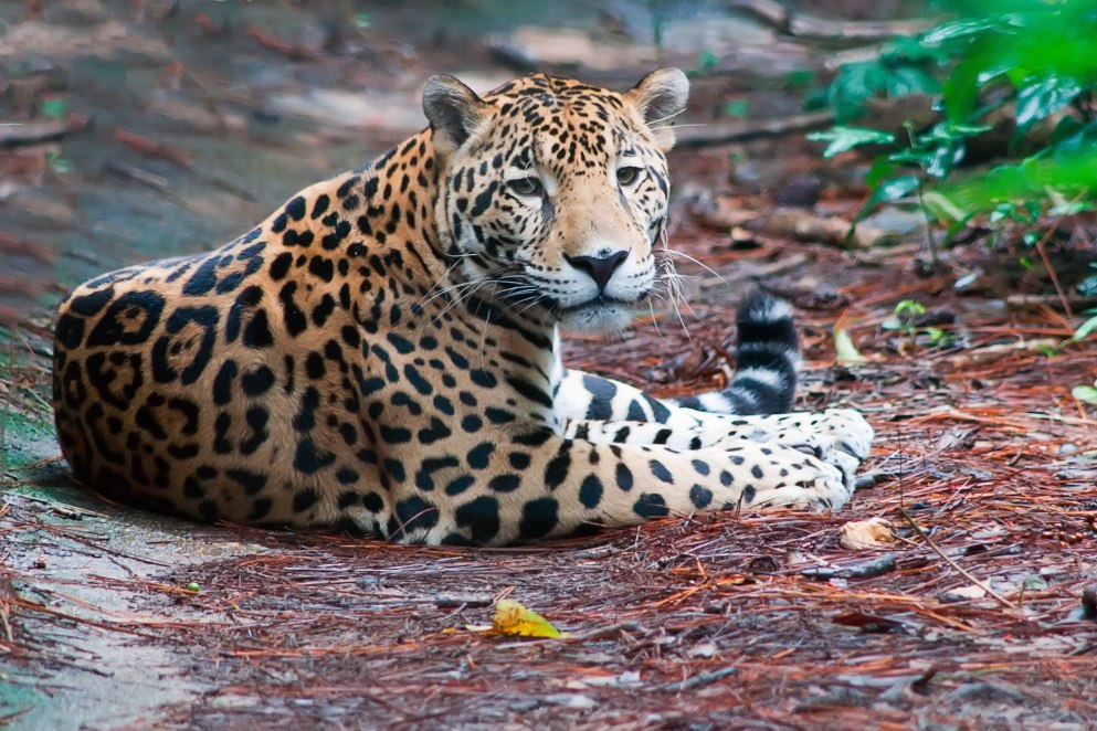 guyana nature experience specialists in guyana holidays