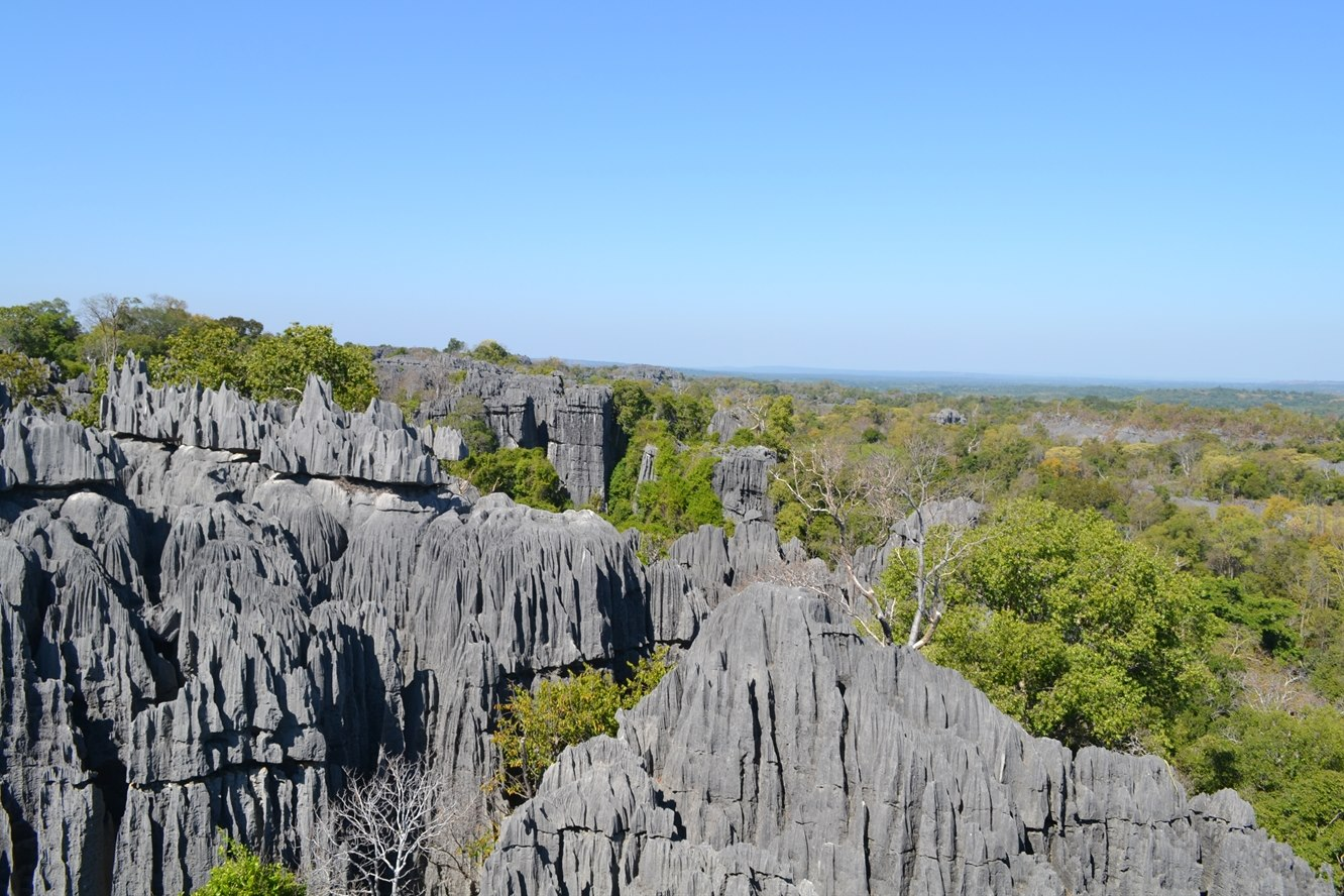 Tsingy Baobabs Wildlife And Whales