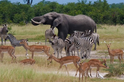 Chobe River and Okavango Delta Safari