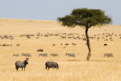Exclusive Kenya Safari & Beach Holiday