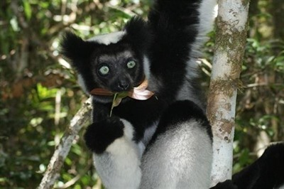 Madagascar Wildlife Extravaganza with Daniel Austin & Hilary Bradt 2018