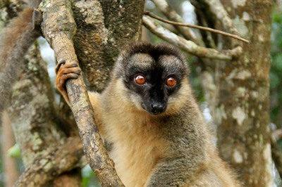 Madagascar Wildlife - Set departure June 2018