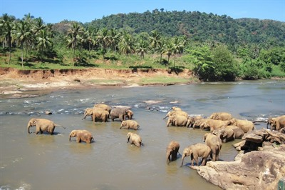 Off the Beaten Track Sri Lanka: Wildlife and Beach Tour