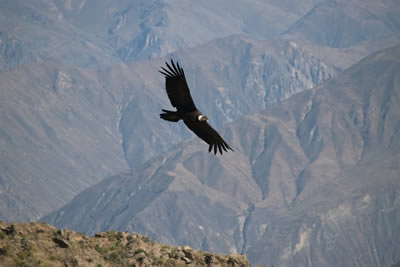 Peru - The Land of Incas, Canyons & Condors