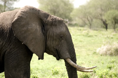 Stunning-Selous Safari and Zanzibar Honeymoon