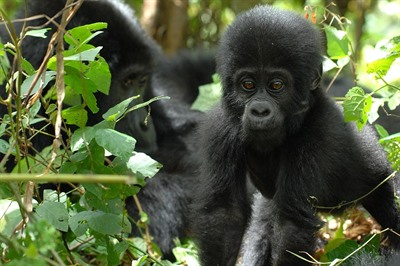 The Ultimate Uganda & Rwanda Small Group Wildlife Tour, Sept 2019