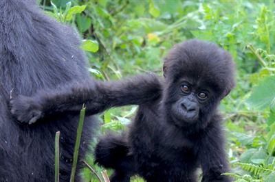 Uganda Gorilla & Game Safari - Small Group tour