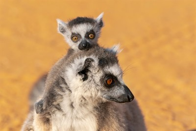 Madagascar Holidays 2019/2020 | Rainbow Tours